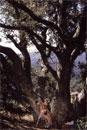 Backwoods - Photo Set 03 picture 3